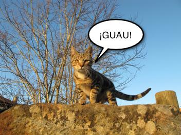 Esperando que el gato Ladre